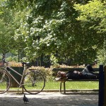 Jardins du Bas-Montreuil (26)