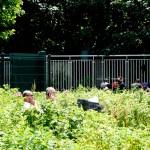 Jardins du Bas-Montreuil (27)