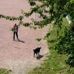 Jardins du Bas-Montreuil (30)