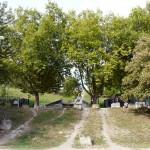 Jardins du Bas-Montreuil (35)